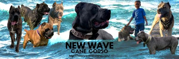 New Wave Cane Corso